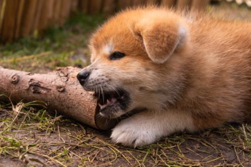 Calmy kauend am Holz