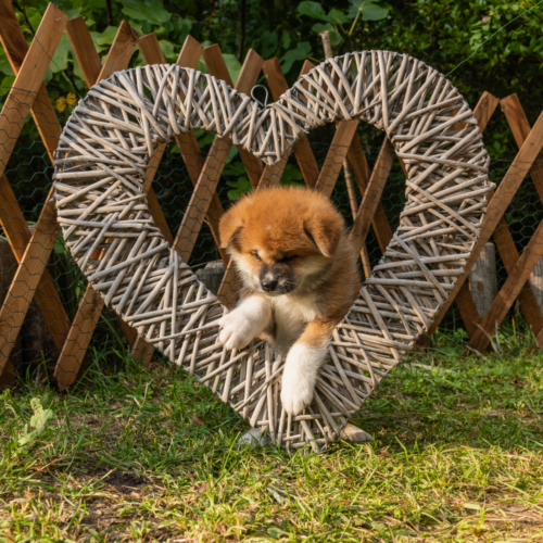 B'Koyo im Herz