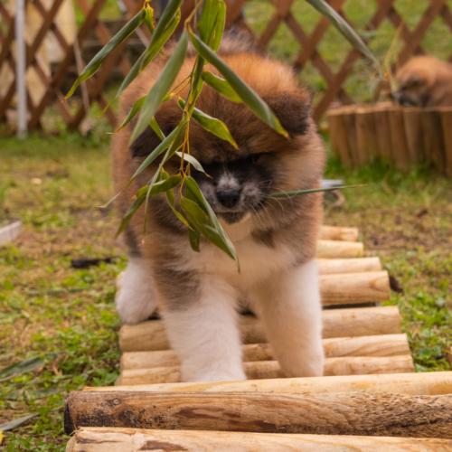 folge dem Bambus