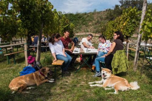 Weinbau Maria Grötzer - ein Geheimtipp